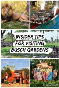 Insider-Tips-for-visiting-Busch-Gardens-533x800